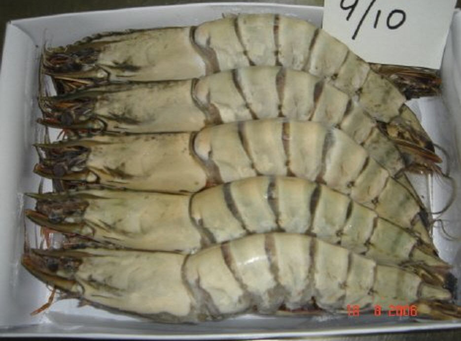 Buy Tiger Prawn