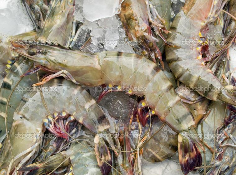 Buy Fresh Shrimp