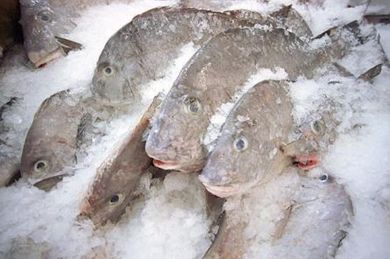 Buy Frozen Fishes