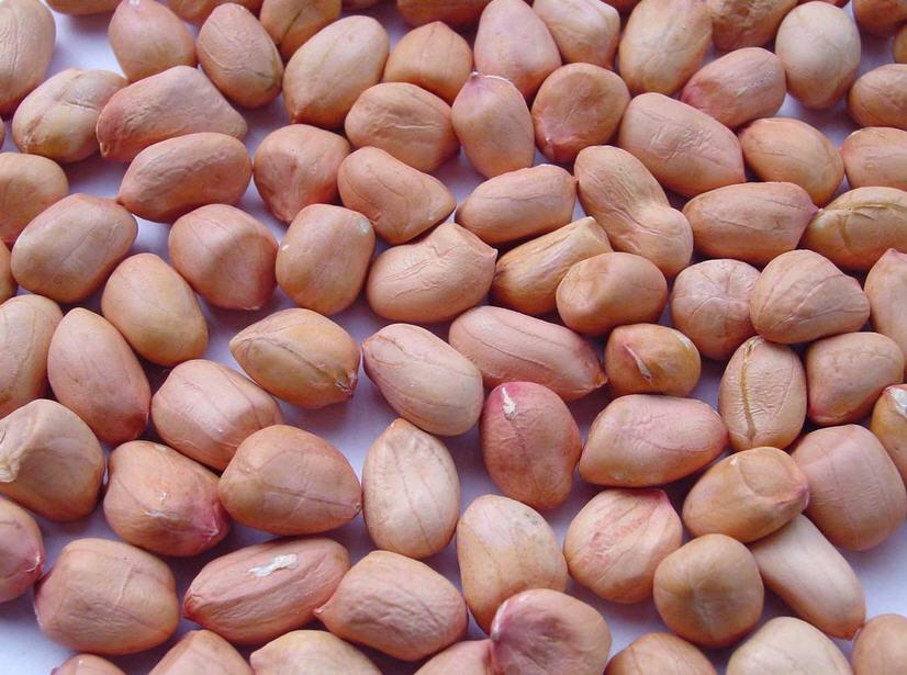 Buy Peanut
