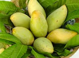 Buy রংপুরের বিখ্যাত হাঁড়িভাঙ্গা আম ও এর চারা