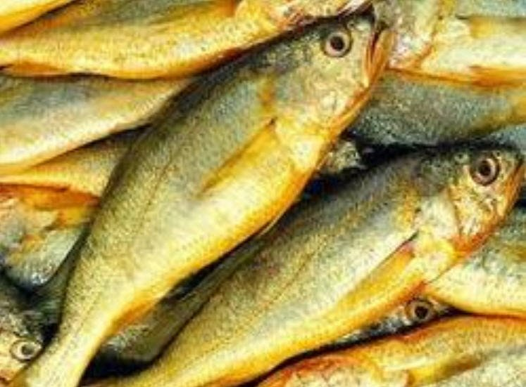 Buy Yellow Croaker