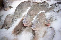 Frozen Fishes
