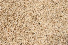 Natural White Small Sesame Seeds