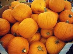Fresh Organic Pumpkin